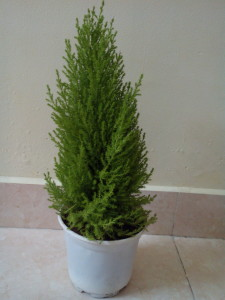 Nhận quà tặng cây thông thơm từ khách hàng Easy Access